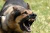 Θεσσαλονίκη: Χειροπέδες σε 25χρονο που μαχαίρωσε και σκότωσε σκύλο