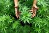 Συνελήφθη άνδρας στην Ηλεία για καλλιέργεια και κατοχή ναρκωτικών