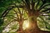 Σχεδόν το ένα στα τρία είδη δέντρων της Γης κινδυνεύουν με εξαφάνιση, εκτιμούν επιστήμονες