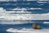 Κλιματική αλλαγή: Ζεσταίνεται η Αρκτική και... ξεπαγιάζει ο υπόλοιπος πλανήτης