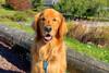 Αυτός ο σκύλος κατέκτησε Ρεκόρ Γκίνες χάρη στα… μπαλάκια του (φωτο)