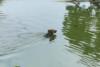 Επική αντίδραση σκύλου που μπερδεύει ξύλο για φίδι