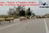 Η Ελλήνων Συνέλευσις (Ε.ΣΥ) σχετικά με τον δρόμο καρμανιόλα Ε.Ο. Πατρών - Πύργου