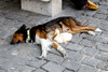 Σκύλος κοιμάται μαζί με πάπια παρέα στο δρόμο (pics)