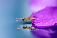 Οι περιπέτειες των μυρμηγκιών μέσα από μοναδικές εικόνες! (pics)