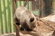 Νεκρό αρκουδάκι από τροχαίο στην Καστοριά!