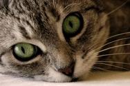 Δέκα ζώα που δεν τους 'καίγεται' καρφί (video)