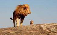 Ζώα ποζάρουν με τα... μικρά αντίγραφά τους! (pics)