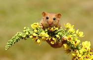 Τα ποντίκια μπορεί να αποδειχτούν και… χαριτωμένα! (pics)