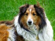 Έξι διάσημοι σκύλοι της τηλεόρασης και του σινεμά (pic+video)