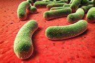 ΕΚΠΟΙΖΩ: Τέλος στην χορήγηση αντιβιοτικών σε υγιή ζώα