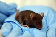 Σήμα κινδύνου στο νοσοκομείο της Νάξου: Βρέθηκε ποντίκι στα Επείγοντα (video)