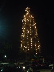 Έτοιμο και το μεγαλύτερο χριστουγεννιάτικο δέντρο της Πάτρας (pics)