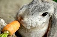 Τα κουνέλια... δεν θέλουν καρότα (vids)