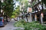 Πάτρα: Στους δρόμους τα συνεργεία του Δήμου μαζεύουν κλαδιά - Προβλήματα λόγω της κακοκαιρίας