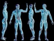 Έξι μέρη του σώματος που μας είναι… άχρηστα!