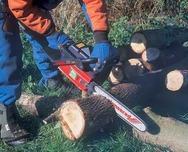 Ηλεία: Νεκρός 56χρονος πατέρας τεσσάρων παιδιών που καταπλακώθηκε από δέντρο