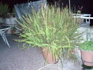 Γλάστρες και λουλούδια στα μπαλκόνια της Πάτρας - Δίνουν άλλο άρωμα στη νύχτα (pics)