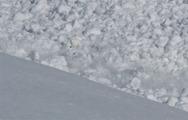 Δείτε τι έκανε αυτό το κουνέλι κατά τη διάρκεια χιονοστιβάδας (video)