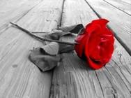 Πάτρα: Θρήνος για την 20χρονη που έχασε τη ζωή της για... λίγα λουλούδια!