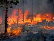 Ηλεία: Μεγάλη πυρκαγιά κατευθύνεται στο δάσος της Νέδας