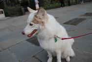 Αμαλιάδα: Έδεσαν τον σκύλο σε κολώνα φωτισμού και τον παράτησαν