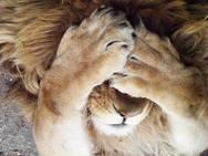 Λιοντάρια σε... χαριτωμένες πόζες (pics)
