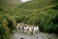 Το νησί που κατοικείται μόνο από... πιγκουίνους! (pics+vids)