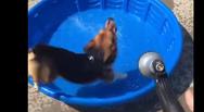 Δείτε το χαριτωμένο σκυλάκι που απολαμβάνει το δικό του 'Pool party' (video)