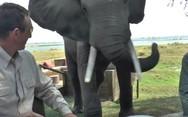 Ελέφαντας καταστρέφει το γεύμα ξέγνοιαστων τουριστών (video)