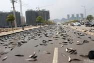 Στην Ονδούρα βρέχει... ψάρια! (pics+video)
