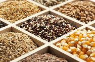 6 σπόροι που σε βοηθούν να χάσεις κιλά (pics)