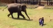 Ελέφαντας σώζει τον άντρα που τον φροντίζει μετά από επίθεση (video)