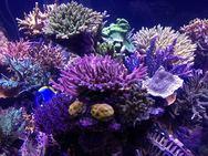 Τα αντηλιακά ''σκοτώνουν'' τα... κοράλλια! (pic)