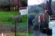 Αγρίνιο: Έδεσε και κρέμασε από το δένδρο νεκρές γάτες