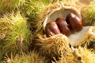 Κάστανα: Θερμίδες και διατροφική αξία της υπερτροφής του χειμώνα