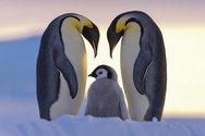 Η αίγλη των πιγκουίνων αποτυπωμένη στο φακό (pics)