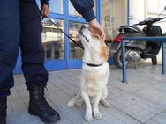 Κάτω Αχαΐα:  Αδέσποτο σκυλάκι σώθηκε από βέβαιο θάνατο (pic)