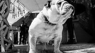 Πάτρα: Ο Γιώργος Κοτοπούλης ''έχασε'' τον αγαπημένο του Φιντέλ (pic)