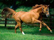 Τα άλογα αντιλαμβάνονται τα ανθρώπινα συναισθήματα