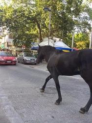 Πάτρα: Το άλογο βγήκε... βόλτα προκαλώντας πανικό