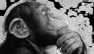 Μαϊμού ελέγχει ρομποτικό αναπηρικό καροτσάκι με την... σκέψη