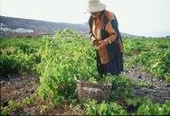 Δυτική Ελλάδα: Σήμερα θα καταβληθούν οι αποζημιώσεις από τον ΕΛΓΑ