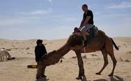 Ποτέ μην εμπιστεύεσαι μία καμήλα (pics+video)