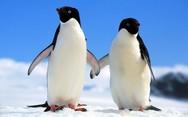 Έχετε δει ποτέ πιγκουίνους να αγκαλιάζονται;