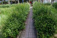 Πλατεία στο κέντρο της Πάτρας θυμίζει… μικρό λιβάδι - Δείτε φωτογραφίες