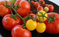 Αλήθεια, ξέρετε σε πόσα χρώματα κυκλοφορεί η ντομάτα; (pics)
