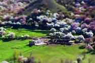 Η εντυπωσιακή κοιλάδα με τις ανθισμένες βερικοκιές στην Κίνα (pics)