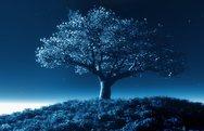 Τα δέντρα «κοιμούνται» κατά τις ώρες της συσκότισης!