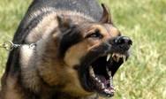 Πάτρα: Σκύλος δάγκωσε τρίχρονο κοριτσάκι